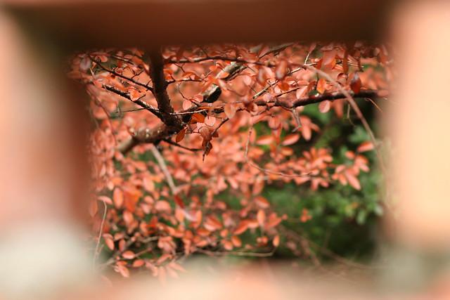 20110624-IMG_7896.jpg