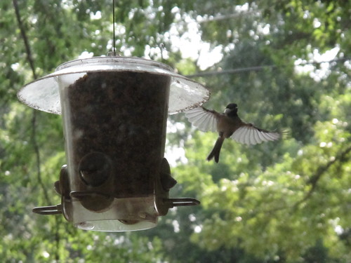 Birds 0324