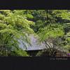 室生寺 新緑 (Eiji Murakami) Tags: summer japan sigma 日本 夏 nara merrill foveon 奈良 dp3 室生寺 フォビオン