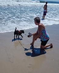 Gabby and Aunt Beth (crisp4dogs) Tags: gabby pwd portuguesewaterdog puppy crisp4dogs acrisp beach water intercoastalwaterway beth