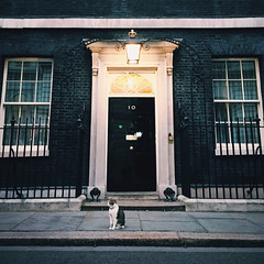 Our dear leader (Olly Denton) Tags: cat pet mousecatcher politics leader journalism photojournalism street road boss iphone iphone6 6 vsco vscocam vscolondon ios apple mac number10 no10 10downingstreet downingstreet whitehall westminster london uk larry