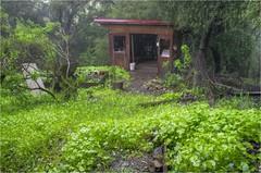 0458_59_60_Miner's Lettuce and a Tool Shed (misterken) Tags: water creek garden pentax stable rainfall meteorology k5 minerslettuce dijemry misterken justpentax dijemryhdr floodingphotomatixhdrdijemrymisterken