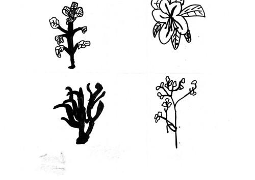 七年級20110324植物描繪一線畫 by catrain™ 貓。果然如是