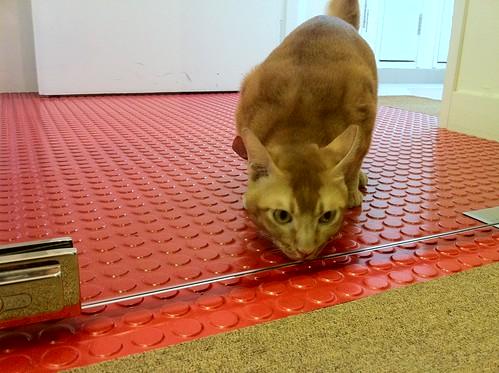 glass cat work