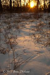 Winter Sunset 2 (NoiseJammer) Tags: winter toronto zeiss highpark ze 235 5dmkii