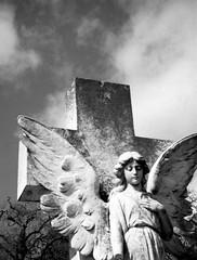 alas (a perhaps hand) Tags: blackandwhite cemetery northerncalifornia angel mediumformat 120film marincounty kodakbw400cn mtolivetcemetery sanrafaelca bencinikorolls vintageitaliancamera