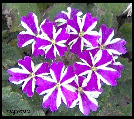 bahar çiçekleri 4