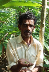 Pepper in hand (bokage) Tags: india man pepper persona spice kerala western cochin kochi ghats periyar