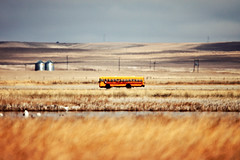 School Daze (Todd Klassy) Tags: road old morning travel school autumn people usa motion bus fall public beautiful yellow kids rural landscape outdoors one countryside moving education highway montana warm day driving mt child bright diesel action farm small country young documentary fast sunny nobody roadtrip september riding fieldtrip journey american single transportation caution learning lone copyspace traveling schoolbus fleet ontheroad firstdayofschool elementary onthemove backtoschool fairfield clearsky reallife distant stockphoto gradeschool stockphotography schooling heatwaves colorimage ruralscene busing nonurbanscene toddklassy schoolbusonafieldtrip
