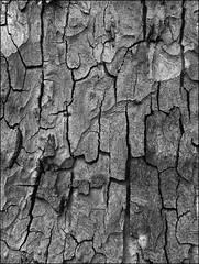 clivelles (jordi.martorell) Tags: cameraphone wood blackandwhite bw tree blancoynegro mobile arbol movil mobil bn textures arbre texturas blancinegre htc cruzadas t4l t4lagree htcwildfire cruzadasi
