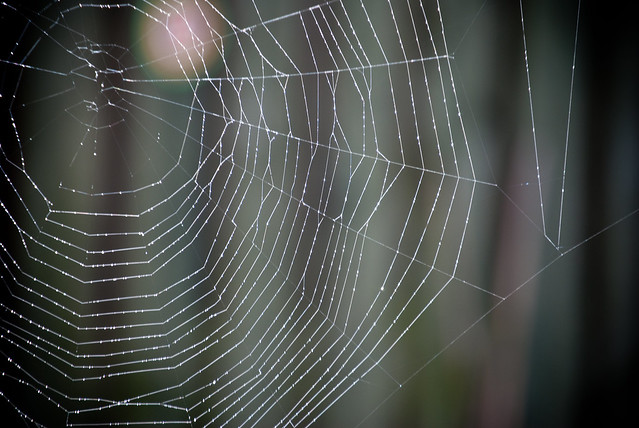 090411_ Spider's Web #5