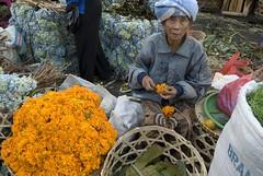 Flower vendor, Denpasar market (1) (jer4799) Tags: bali flower indonesia women asia market hydrangea marigold denpasar