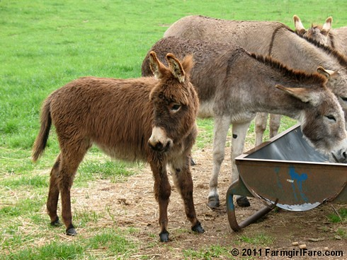The Daily Donkey 65 That Gnat