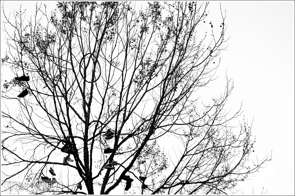 Tree B&W.