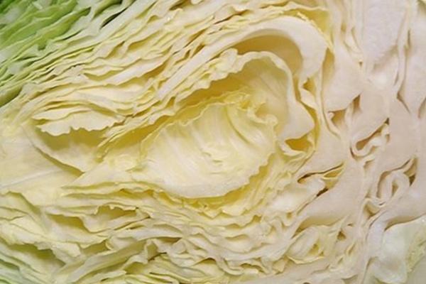 雪翠高麗菜09