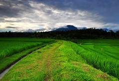 Village (Dyahniar Labenski) Tags: bali green nature landscape cool nikon village weekend fresh paddyfields mtbatur d90 tabanan niar 1024mm mtbatukaru seefrommyeyes ikniroviolet dyahniar affternon