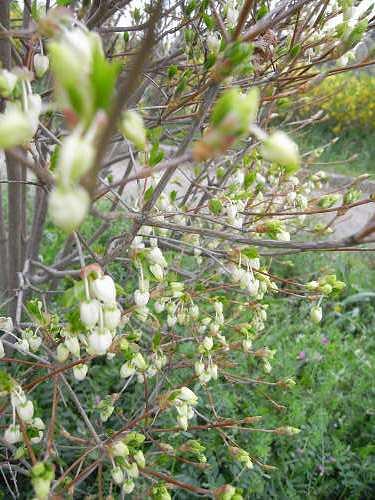 春の花々@明日香村-38