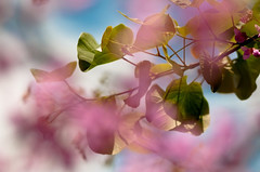 color splash bokeh (omerozd) Tags: flowers macro colors spring nikon blossoms micro nikkor albania tirana 105mm tiran 105mmf28gvrmicro arnavutluk nikkor105mmf28gvrmicro
