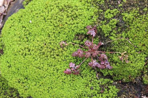 Jones Falls Mini-hike - Moss #2