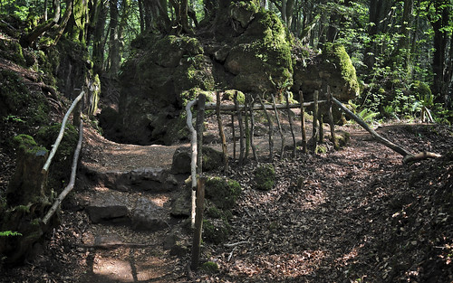 Steps and Fence at Puzzlewood