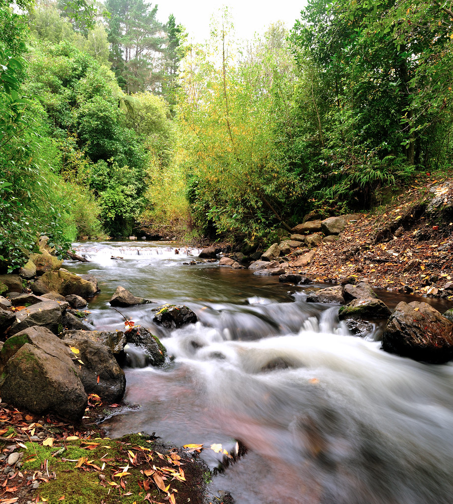 Turitea Stream, Bledisloe Park