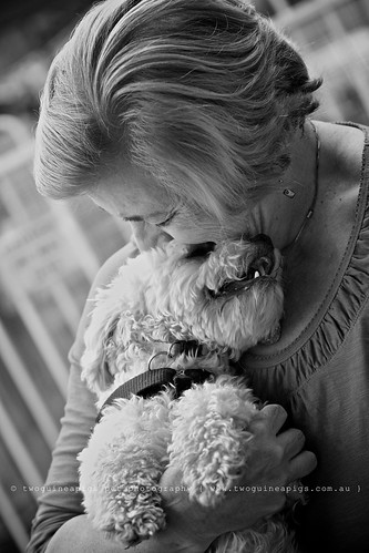 Cuddle Mozart poodle cross maltese dog photography by twoguineapigs Pet Photography