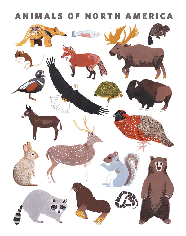 NA-animal-print