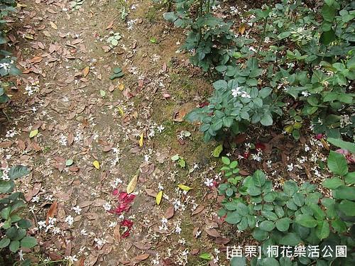 苗栗樂活桐花公園153