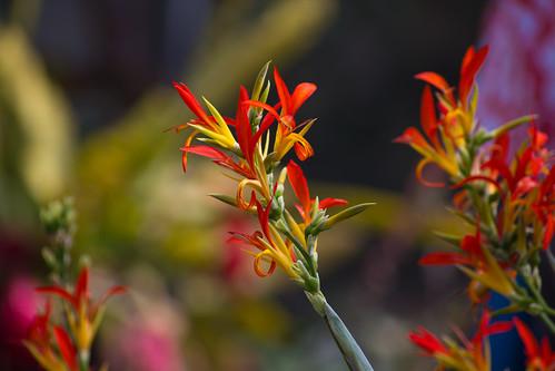 Thwaite Flower 3