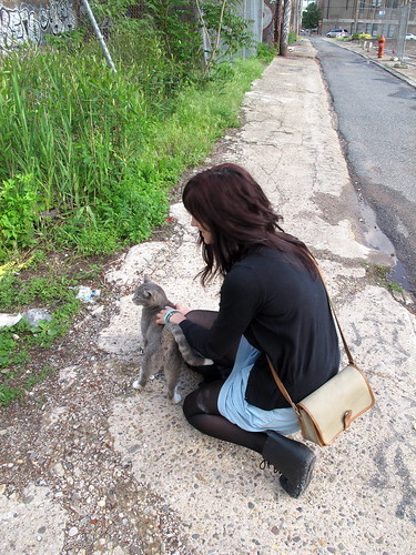 Totally normal to pet stray cats