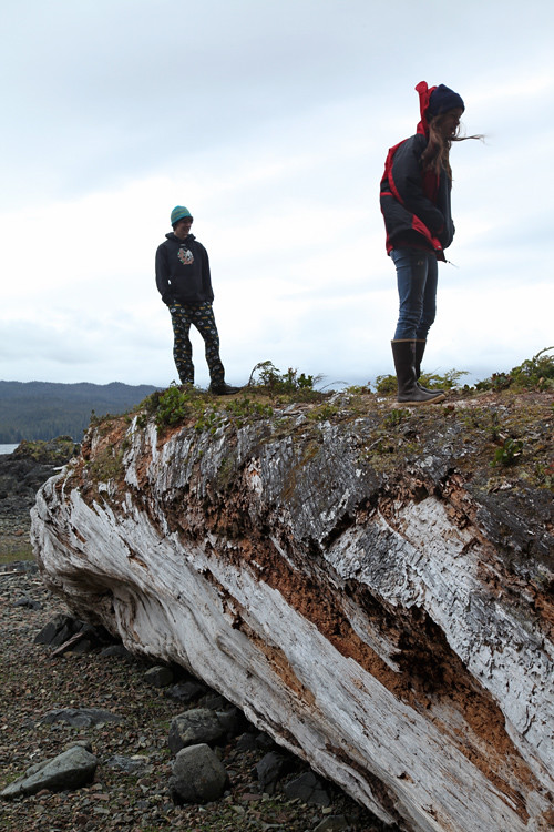 huge log on a beach, Kasaan, Alaska