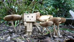 Danboflage?? (Mandasmac) Tags: mushroom toy robot yotsuba danbo toyrobot revoltech danboard