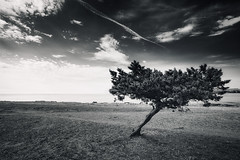 Another Lone Tree (Philipp Klinger Photography) Tags: light shadow sea sky blackandwhite bw sun mer white black tree beach nature grass pine clouds landscape island islands coast mar blackwhite seaside spain nikon meer europa europe mediterranean angle earth ho
