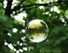 Beautiful Bubble (glantine) Tags: original reflection verde wow reflections wonder backyard vert beaut bubble grn simple magical  bonheur timeless brantford bulle rve magique 2011   bulledesavon abigfave musicalmotion