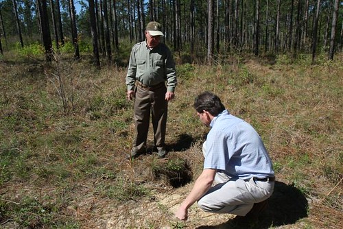 Landowner Orby Wright (left) and NRCS Soil Conservationist Lane Kimbrough examine a burrow made by a gopher tortoise at a longleaf pine farm in Purvis, Miss. More than 300 different vertebrate and invertebrate species rely on the burrows made by this endangered species.