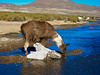 Bolivia S90-100531-090 (Kelly Cheng) Tags: southamerica bolivia getty pickbykc
