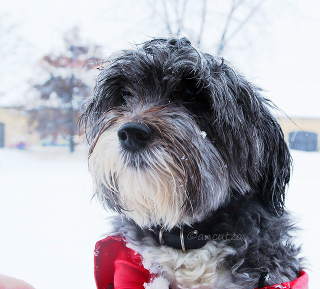 foto cane tenero