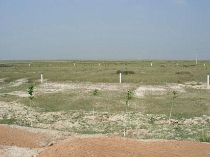 Fenced grassland