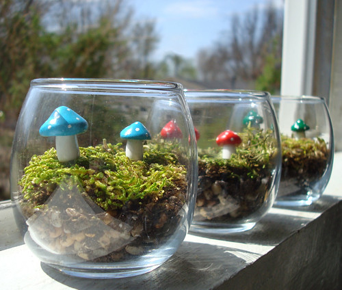 Mushroom Garden- Maintenance Free Mini Terrarium