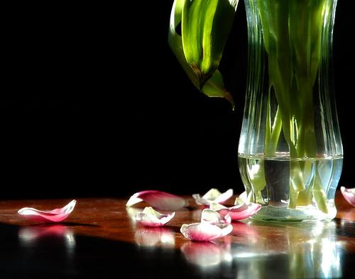 82:365 Flowers Fade