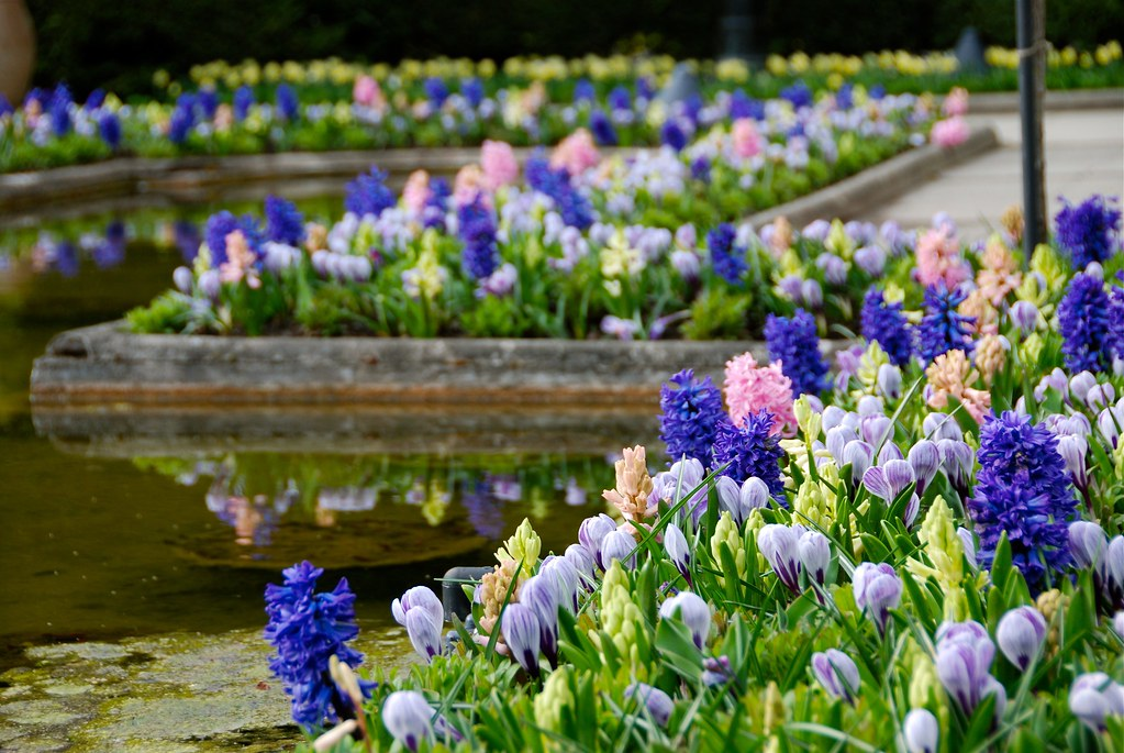{Butchart Gardens} Italian Gardens