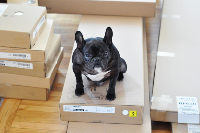 LeRoy on the Ikea boxes