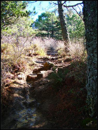 Ruta Torrecilla (3)