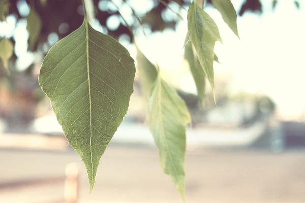 DITL 10: Leaf