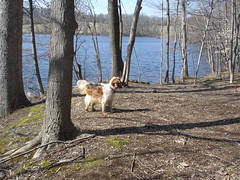daisy (rachael8amen) Tags: dog lake pennsylvania daisy chestercounty marshcreekstatepark eaglevillage marshcreeklake