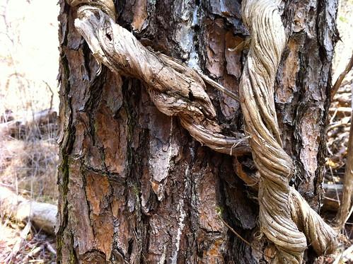 Twisting vines