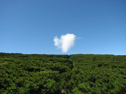 ハイマツと雲