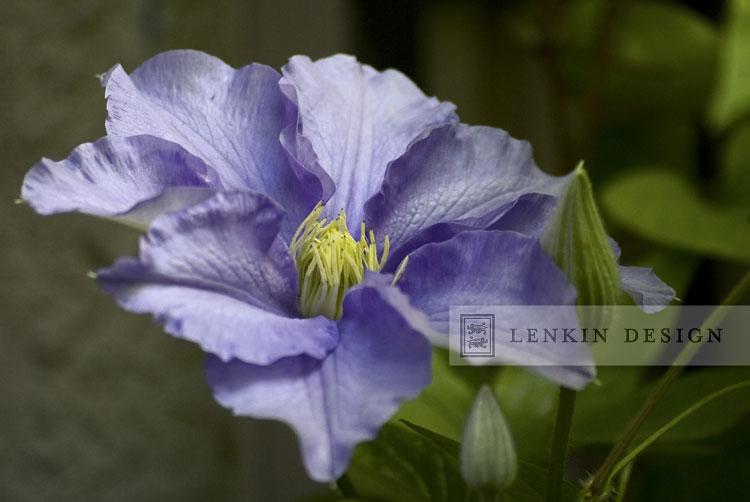 Lenkin 04.05.11-013
