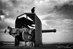 The Defender (D.J. De La Vega) Tags: world leica 2 two bird war gun wwii ii ww2 crow raven x1