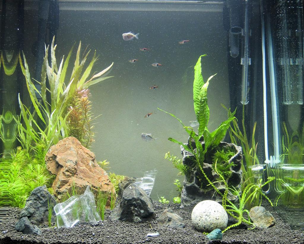 (snoopygirl) Tags: Aquarium Ada Osaka Amazona Aquascape Planted Fluval